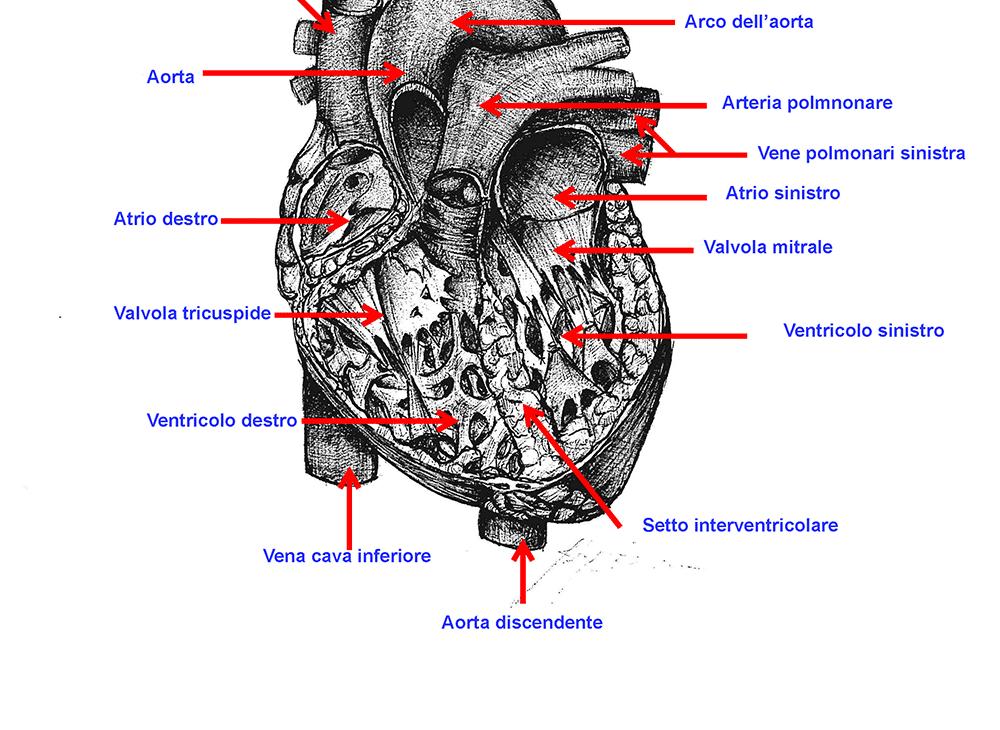 Informazione medico-scientifica